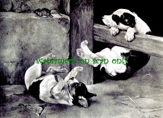 Antique Art~American Staffordshire Pit Bull Terrier Dogs~Mouse~NEW Lg