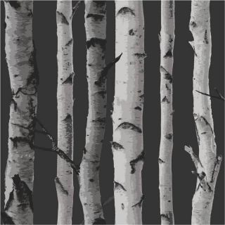 / Silver   FD31052   Birch Tree Forest Woods   Fine Decor Wallpaper