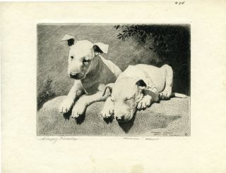 Original Morgan Dennis Bull Terrier Puppies Dog Etching