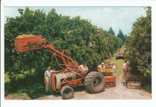 Harvest Orange Postcard Farm Equipment Farming Tractor Lemon