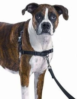 Premier Gentle Leader Easy Walk Harness for Dogs All Sizes