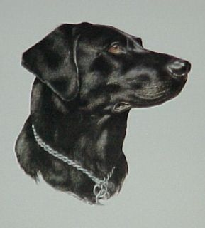 Collectible~ BLACK LAB LABRADOR RETRIEVER Dog ~Breed Print 1984 by
