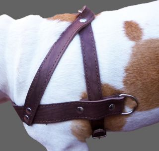 Pulling Real Leather Dog Harness 1 5 Wide Brown 31 35 Size Pitbull